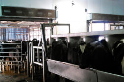 Wisconsin dairy farm solves temperature issues with air curtains